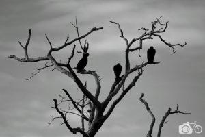 Nature, Planète Terre, oiseaux