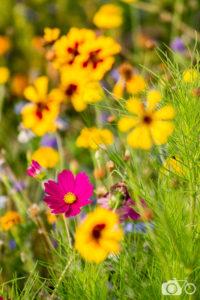 Nature, Planète Terre, flore