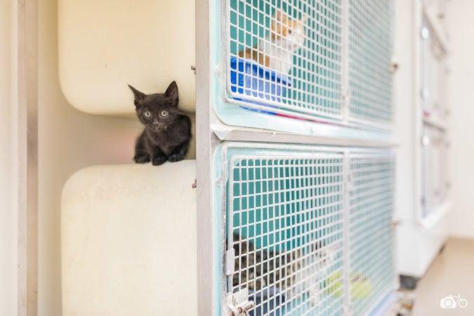 un chaton se cache derrière les cages dans un local de la SPA du Pays de Saint-Malo